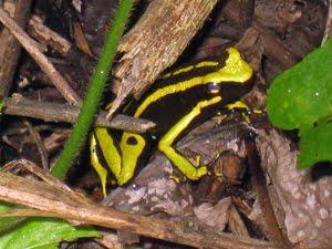 Inhabitant of La Selva